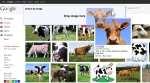 Google's Reverse Image Search