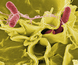 Innovative Molecular Detection System for Dangerous Foodborne Pathogens