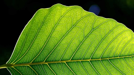 Drawing inspiration from Mother Nature in designing an 'artifical leaf'