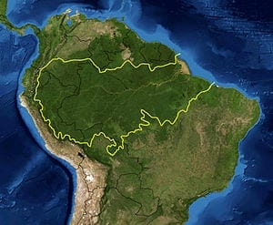Amazon deforestation brings loss of microbial communities