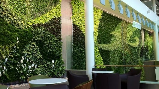 Air Purifying Art: Edmonton International Airports Living Wall