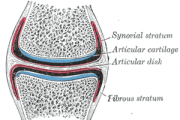 Repairing articular cartilage defects with an injectable gel
