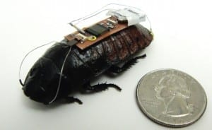 Researchers Develop Technique to Remotely Control Cockroaches