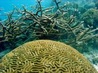 Coral reefs suffering, but collapse not inevitable
