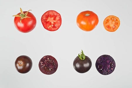 red-and-purple-tomatoes1