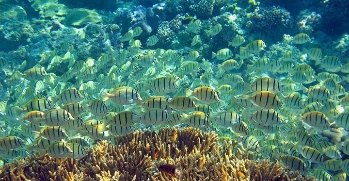 CoralGardens