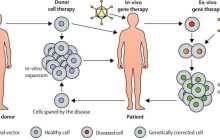 New gene repair technique promises advances in regenerative medicine