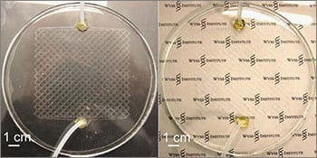 microfluidic_window_2-350x175