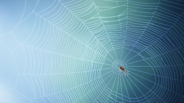 From spiders, a material to rival Kevlar