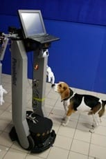 Dogs' behavior could help to design social robots