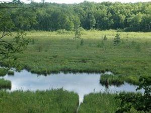 300px-Wetland_Large