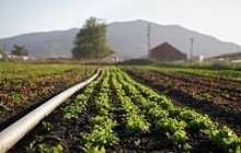 Small Changes in Agricultural Practices Could Reduce Produce-borne Illness