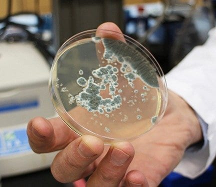 Attacking Fungal Infection, One of the World's Major Killers