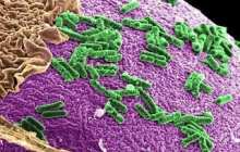 Altering Community of Gut Bacteria Promotes Health and Increases Lifespan