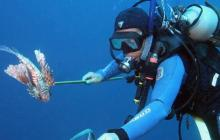 War on lionfish shows first promise of success