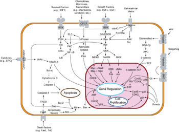 Overview of signal transduction pathways involved in apoptosis, also known as