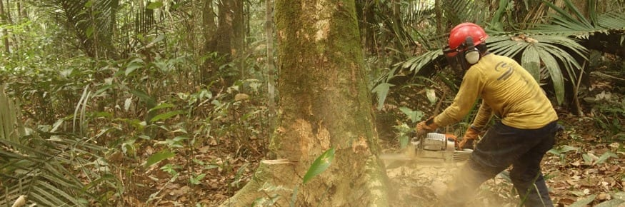 Logging in the Amazon rainforest; courtesy of Luke Parry
