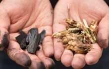 Lopwood and brushwood make high-grade charcoal