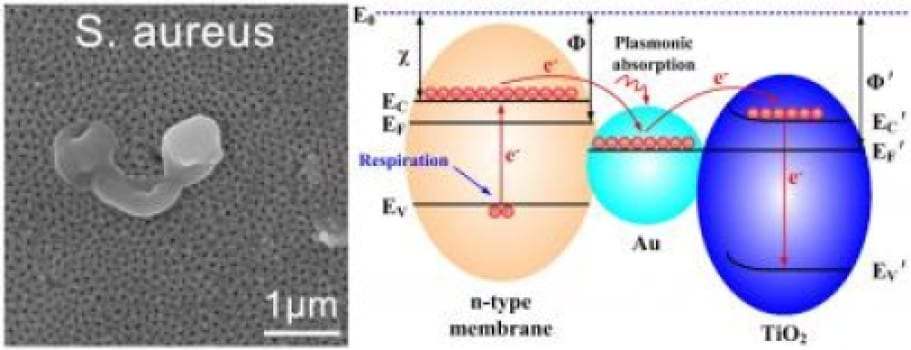 This image depicts destructive electron extraction from bacterial membranes by plasmonic gold nanoparticles. Credit: Jinhua Li/SICCAS