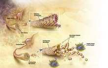 Montreal researchers make Alzheimer's breakthrough