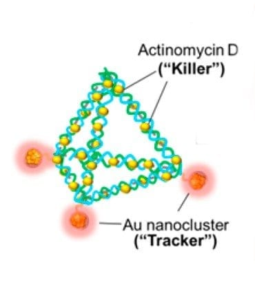 DNA pyramids, made with gold (Au) trackers and the germ-killer actinomycin D, are a potential new weapon in fighting bacterial infections. Credit: American Chemical Society