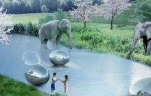 In The Zoo Of The Future, There Are No Cages And The Animals Roam Freely