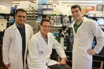 Photo courtesy McMaster University The report's authors: Waliul Khan, associate professor of pathology and molecular medicine and Gregory Steinberg, professor of medicine, with lead author and post-doctoral fellow Justin Cran.