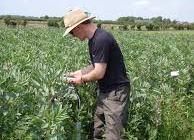 Smart farming technique to boost yields and cut fertiliser pollution