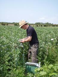 Dr Shane Rothwell carrying out crop trials via Lancaster University