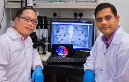 NTU scientists discover new treatment for dementia