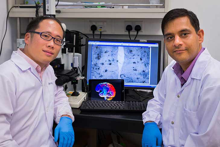 New brain cells can be formed through deep brain stimulation, improving memory retention