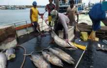 Fisherfolk, communities need more than healthy fish stocks