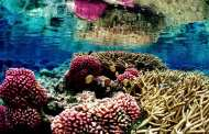 Synthetic Coral Could Remove Toxic Heavy Metals From the Ocean