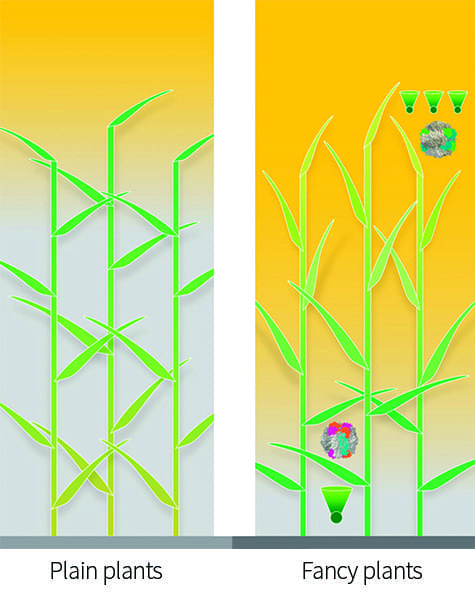 In an optimized canopy (right), leaves at the top, which receive too much light, might tilt vertically and have smaller and fewer light-gathering antennas (green cones) feeding many reaction centers. Those lower in the canopy would have larger antennas feeding fewer reaction centers. The leaves at the top would have a variant of RuBisCO, an important enzyme in photosynthesis, that had high catalytic activity but not be particularly good at distinguishing carbon from oxygen, whereas those at the bottom might have RuBisCO variants that were slower but less inclined to pick up oxygen instead of carbon.