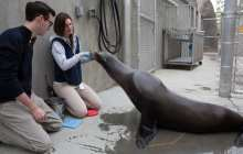 Building a Machine to Mimic What Sea Lions Naturally Do - Moving Without Creating a Wake