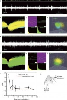 Evoked neuronal signals in response to whisker stimulation were recorded using ECM electrode implants in the rat barrel cortex. Initial extended-time neural recording studies suggest that the electrodes maintained their recording capability over a five-week time period and were stable over four weeks after implantation.