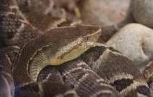 Snake venom helps hydrogels stop the bleeding