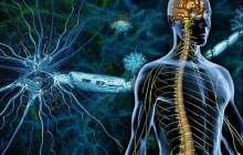 Curing multiple sclerosis