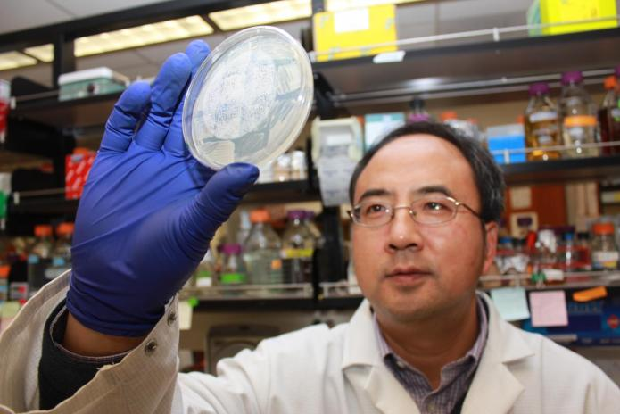 Xiaofeng Wang, an assistant professor in the Virginia Tech College of Agriculture and Life Sciences, has discovered a way to track and potentially stop viruses. CREDIT Virginia Tech