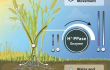 Improved crop performance with new simple biotechnology