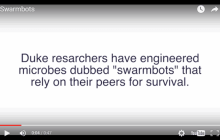 Duke University bioengineers design swarmbots that die if they leave the confines of their capsule