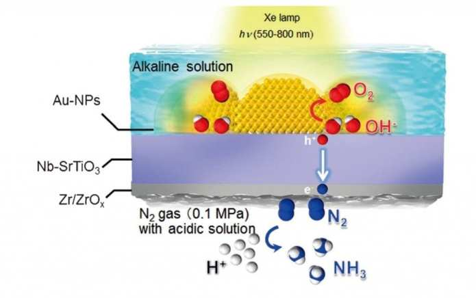 Layout of the NH3 synthesis device bearing the Nb-SrTiO3 photoelectrode loaded with Au-NPs and a Zr/ZrOx thin film
