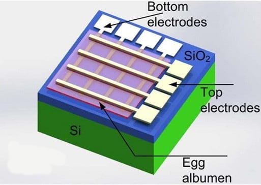 A new electronic component partly made with egg proteins could help enable dissolvable devices. Credit: American Chemical Society