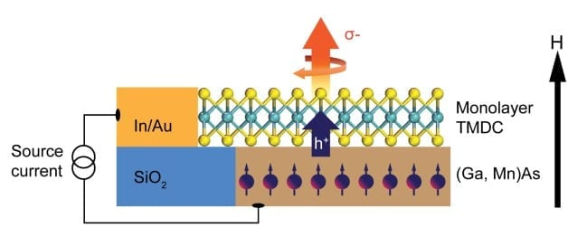 This schematic shows a TMDC monolayer coupled with a host ferromagnetic semiconductor, which is an experimental approach developed by Berkeley Lab scientists that could lead to valleytronic devices. Valley polarization can be directly determined from the helicity of the emitted electroluminescence, shown by the orange arrow, as a result of electrically injected spin-polarized holes to the TMDC monolayer, shown by the blue arrow. The black arrow represents the direction of the applied magnetic field. (Credit: Berkeley Lab)
