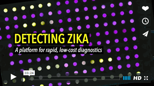 In this video, a team of collaborators led by Wyss Core Faculty member James Collins discusses a low-cost, rapid paper-based diagnostic system that they developed for detecting specific strains of the Zika virus, with the goal that it could soon be easily used in the field to screen blood, urine, or saliva samples. Credit: Wyss Institute at Harvard University