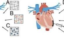 Building a bionic cardiac patch