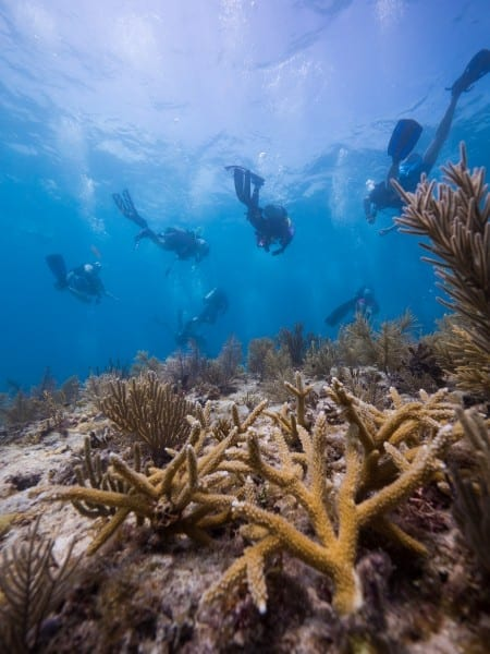 Joe Berg/Way Down Video Mote Marine Lab scientists restore staghorn corals in 2015 in the Florida Keys with volunteer helpers from the Combat Wounded Veteran Challenge and SCUBAnauts International. On Sept. 12, 2016, Mote signed a one-year agreement with The Nature Conservancy toward a proposed 15-year initiative to restore corals at unprecedented scales in the Florida Keys and Caribbean.