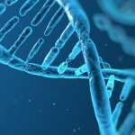 We are what we eat: It affects the DNA sequence of genes