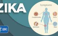 An antibody that 'neutralizes' the Zika virus?