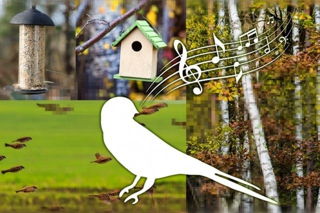 The researchers' neural network was fed video from 26 terabytes of video data downloaded from the photo-sharing site Flickr. Researchers found the network can interpret natural sounds in terms of image categories. For instance, the network might determine that the sound of birdsong tends to be associated with forest scenes and pictures of trees, birds, birdhouses, and bird feeders. Image: Jose-Luis Olivares/MIT
